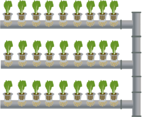 vertical farming application greenwall