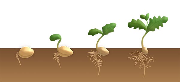 Germination Illustration application