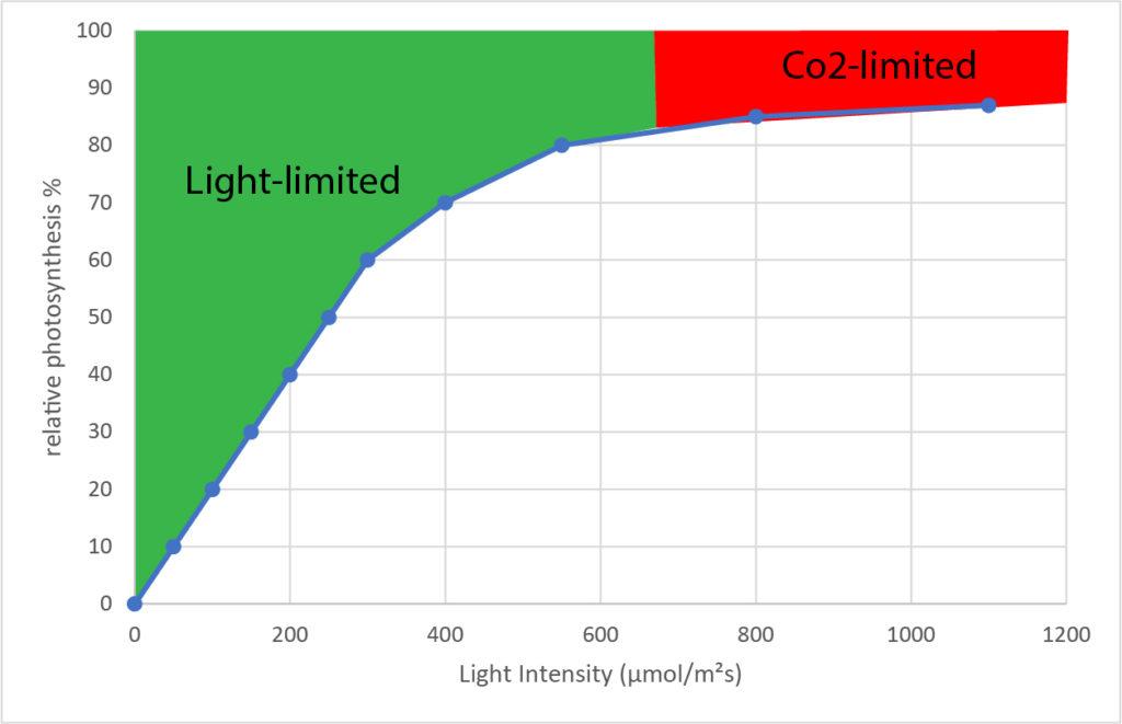 Light-intensity-photosynthesis-